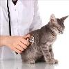 Ветеринарные клиники в Пензе